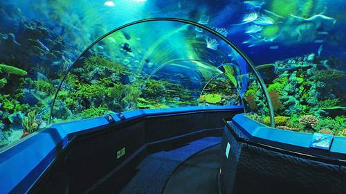 壁纸 海底 海底世界 海洋馆 水族馆 500_280